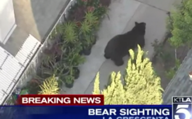 bear sighting