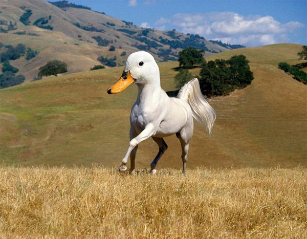 Duck Horse Photoshop