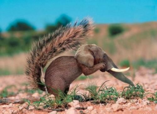 Elephant Squirrel Photoshop
