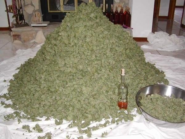 weed-mountain